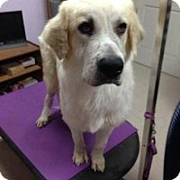 Adopt A Pet :: Conrad - Del Rio, TX