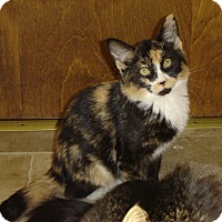 Adopt A Pet :: Allie - Grayslake, IL