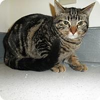 Adopt A Pet :: Everest - Milwaukee, WI