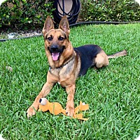 Adopt A Pet :: Dutch - Coral Springs, FL