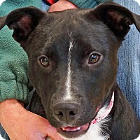 Adopt A Pet :: Queenie - Sprakers, NY