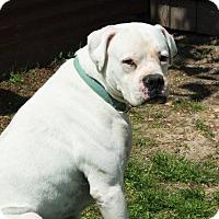 Adopt A Pet :: Sampson - Joplin, MO