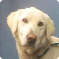 Adopt A Pet :: Frisbee - Baltimore, MD
