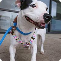 Adopt A Pet :: Bridgette - Houston, TX