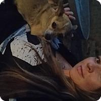 Adopt A Pet :: Ladybug - PHOENIX, AZ