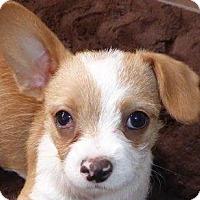 Adopt A Pet :: Sarah - San Diego, CA