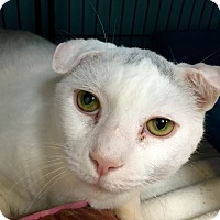 Adopt A Pet :: Judge - Wilmington, DE