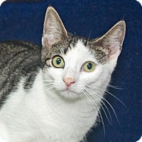 Adopt A Pet :: Amber - Elmwood Park, NJ