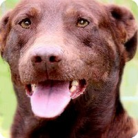 Adopt A Pet :: HUDSON(A FAMILIES BEST FRIEND! - Wakefield, RI