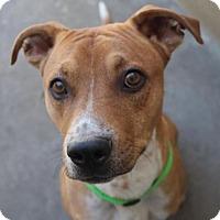 Adopt A Pet :: TYLER - Red Bluff, CA