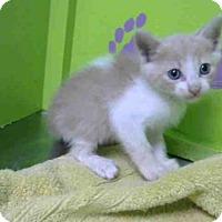 Adopt A Pet :: VANILLA BEAN - Houston, TX