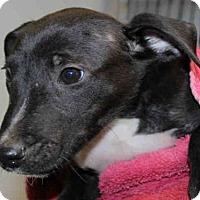 Adopt A Pet :: BOBBY - Wainscott, NY