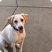 Pointer Mix Dog for adoption in Shinnston, West Virginia - Anderson Cooper