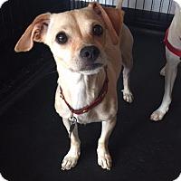 Adopt A Pet :: Betsey - Freeport, NY