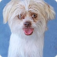 Adopt A Pet :: Leander - Encinitas, CA