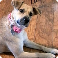 Adopt A Pet :: Majel - Knoxville, TN