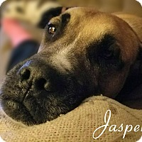 Adopt A Pet :: Jasper - Columbia, TN