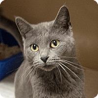 Adopt A Pet :: Madam Bovary $20 - Lincolnton, NC
