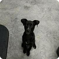 Adopt A Pet :: Kovu - Paducah, KY