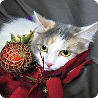 Adopt A Pet :: Nina (& Nelly) - Herndon, VA