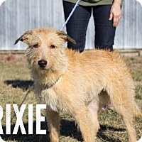 Adopt A Pet :: Trixie - Murphysboro, IL