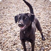 Adopt A Pet :: Carmen - Lewisville, IN