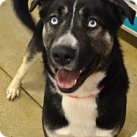 Adopt A Pet :: Simon - Cincinnati, OH