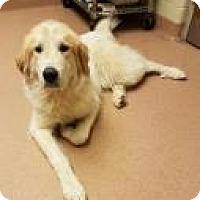 Adopt A Pet :: Freddy 0131 - Columbus, GA