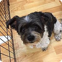 Adopt A Pet :: Trooper - Valencia, CA