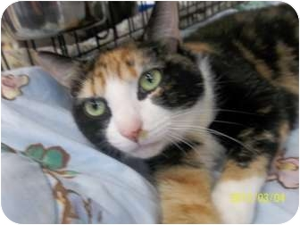 Calico Cat for adoption in Riverside, Rhode Island - Madeline