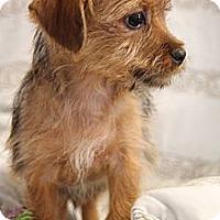 Adopt A Pet :: Bernie - Knoxville, TN