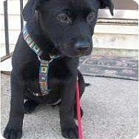 Adopt A Pet :: Daisy (Fostered in NH) - Hagerstown, MD