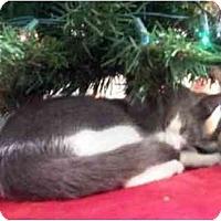 Adopt A Pet :: Arrow - Summerville, SC