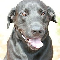 Adopt A Pet :: Lucy - Canoga Park, CA