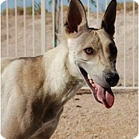Adopt A Pet :: Princess Lucy - Golden Valley, AZ