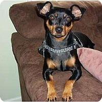 Adopt A Pet :: Maxwell - Nashville, TN