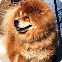Adopt A Pet :: Sam - Tucker, GA