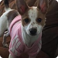 Adopt A Pet :: Skittles - Marlton, NJ
