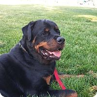 Adopt A Pet :: Blaze - Frederick, PA