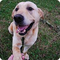 Adopt A Pet :: Digby - Gainesville, FL