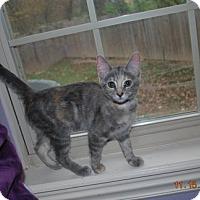 Adopt A Pet :: Luna Lovegood - Bentonville, AR