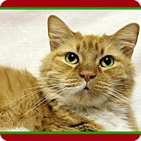 Adopt A Pet :: Pumpkin - Tracy, CA