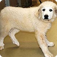 Adopt A Pet :: Bernice - Indian Trail, NC