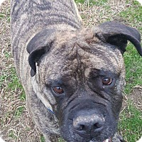 Adopt A Pet :: Ruger in CT - Manchester, CT