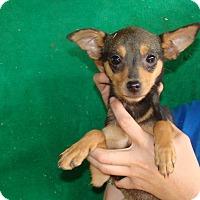 Adopt A Pet :: Flower - Oviedo, FL