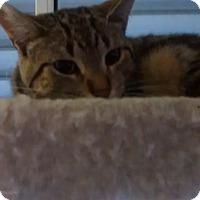 Adopt A Pet :: Pooky - detroit, MI
