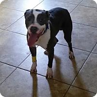 Adopt A Pet :: Wags - Las Vegas, NV