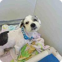 Adopt A Pet :: *MANNY - Upper Marlboro, MD
