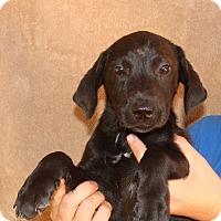 Adopt A Pet :: Willow - Oviedo, FL