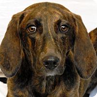 Adopt A Pet :: Kona - Newland, NC